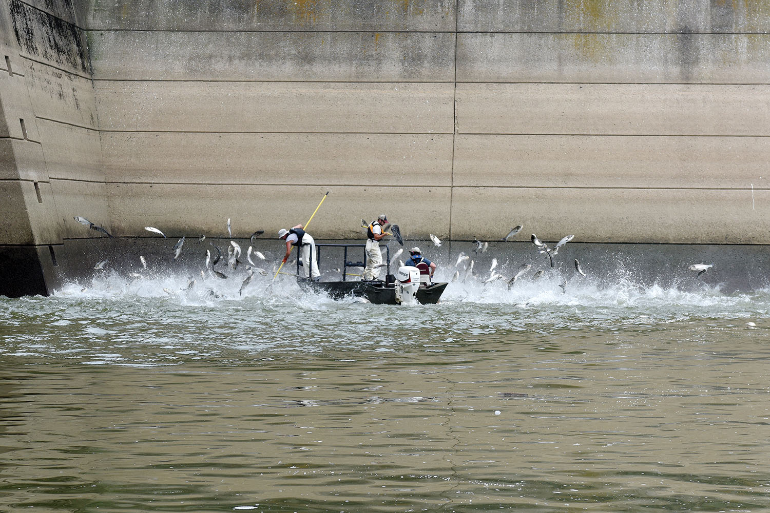 (Left to right) Josh Tompkins, fisheries biologist; Nathan Rister, fisheries technician; and Matt Combs, fisheries biologist; Kentucky Department of Fish and Wildlife Resources, demonstrate electrofishing for Asian Carp on the Cumberland River next to Barkley Dam in Grand Rivers, Ky., July 30, 2019. The U.S. Army Corps of Engineers, U.S. Fish and Wildlife Service, Kentucky Department of Fish and Wildlife Resources, U.S. Geological Survey and Tennessee Wildlife Resources Agency are collaborating on the deployment of a bio-acoustic fish fence on the downstream side of Barkley Lock as part of a test of this sound deterrent to reduce the use of the locks by Asian Carp. (Corps of Engineers photo by Leon Roberts)