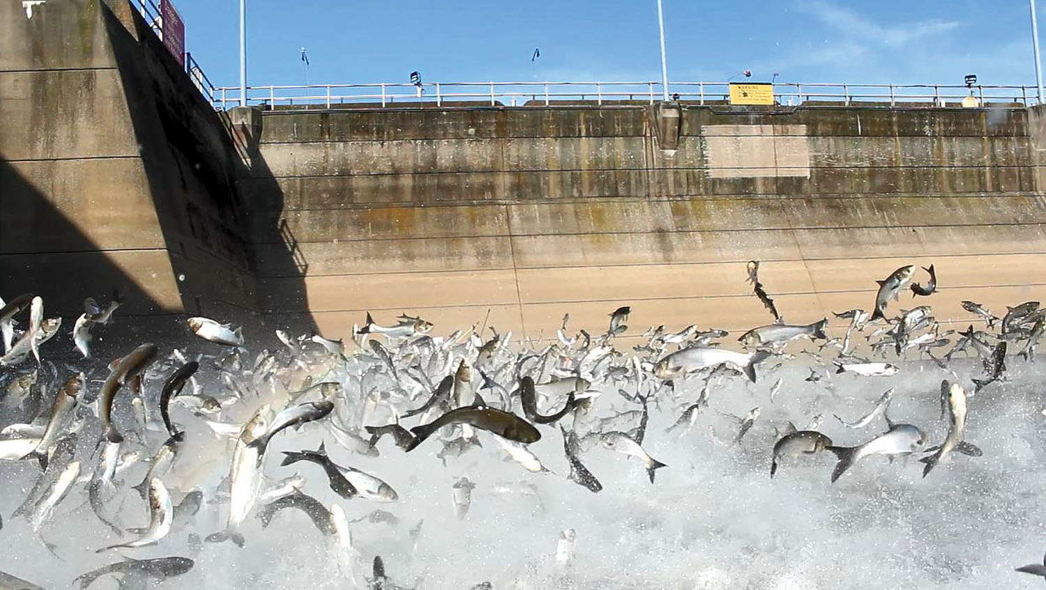 Asian Carp Seminar Presents Info On Eradication Efforts